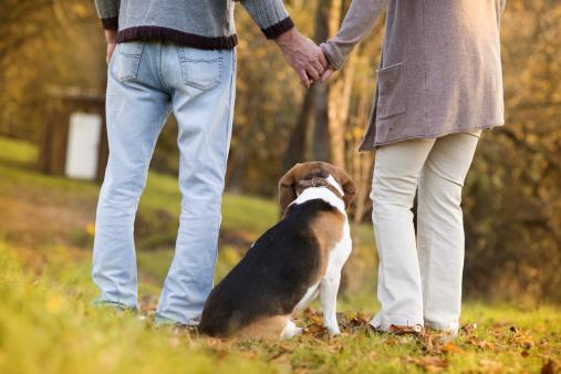 Walk dog date
