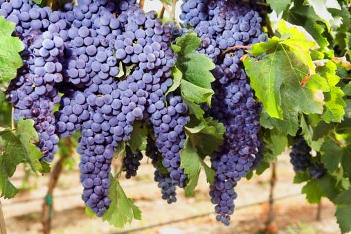 Winery Tour Date Idea Cincinnati