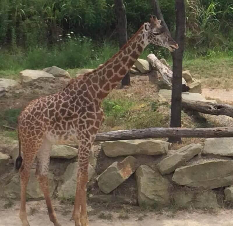 Cincinnati Zoo - Gift Idea