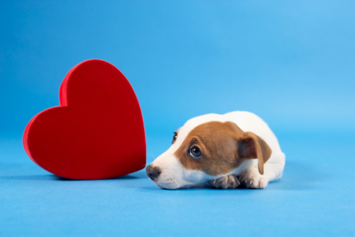 Cincinnati Valentine's Day Event - My Furry Valentine