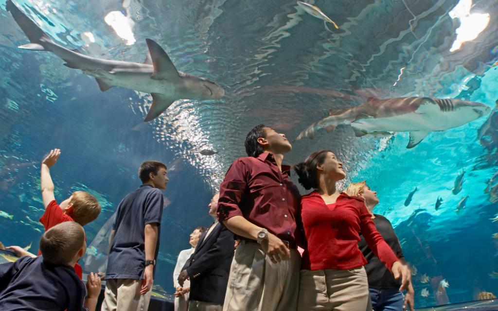 indoor dates Newport Aquarium