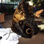 Magical and fun: The Krohn Conservatory Butterfly Show 2017